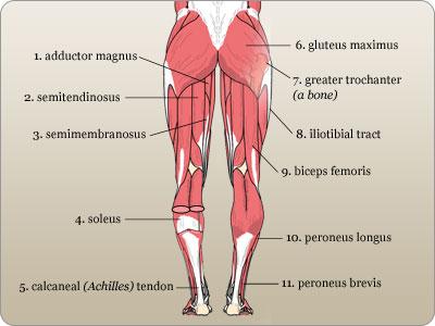 Define tendon quizlet
