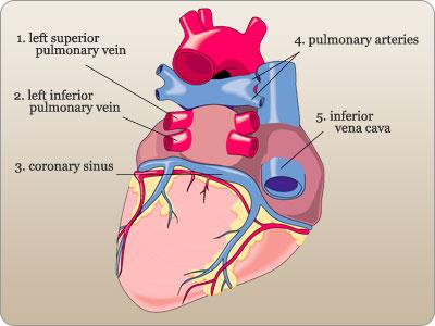 Cardiovascular system flashcards quizlet ccuart Choice Image